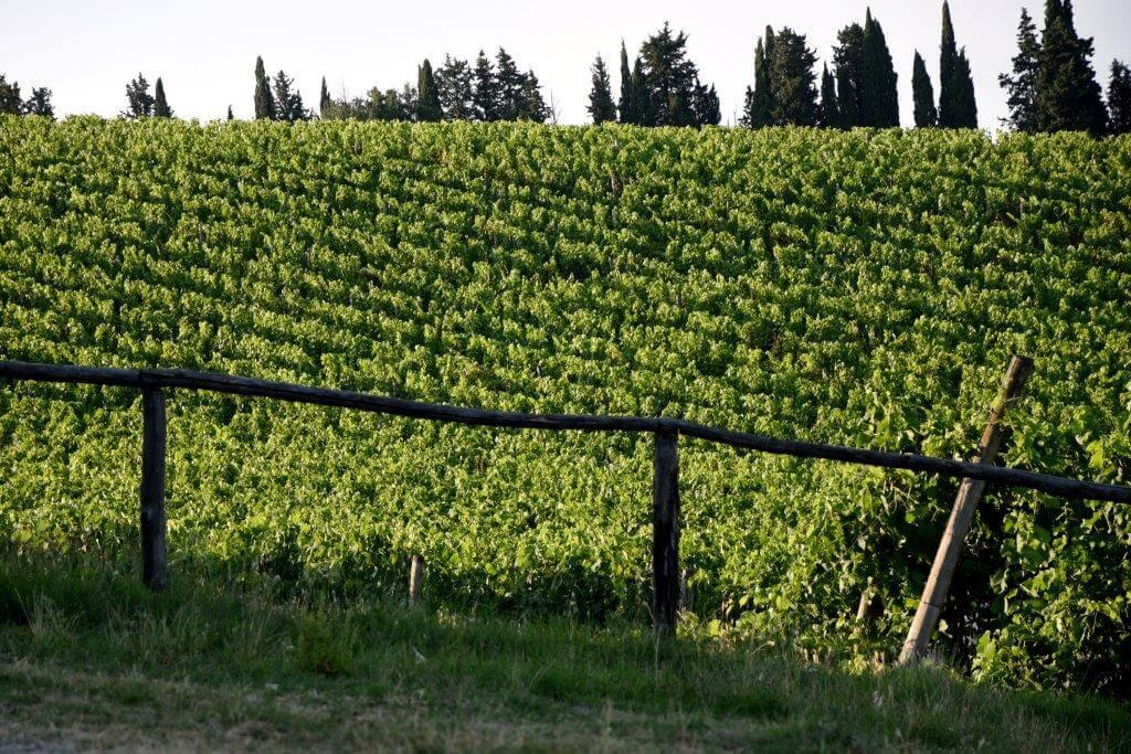 Vino Puro Toscano
